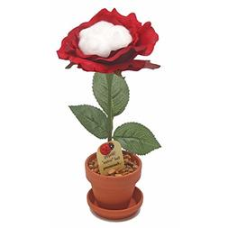 JustPaperRoses 2nd Wedding Anniversary Gift Potted Cotton Ro